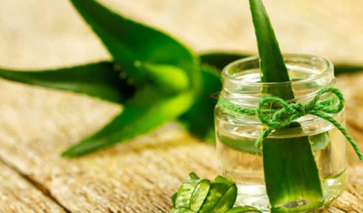 Aloe vera yağı nedir, faydaları nelerdir?