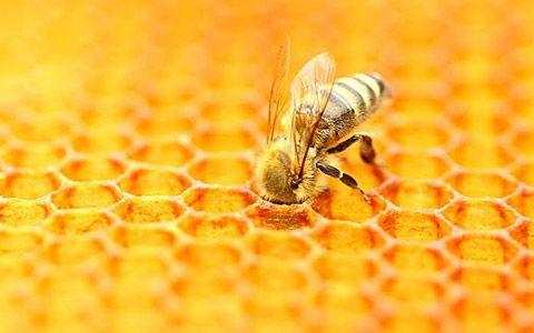 arı sütü hakkında bilgi