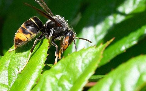 arı sütü ne işe yarar