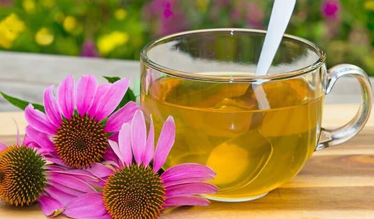 Ekinezya çayı nedir, faydaları nelerdir?