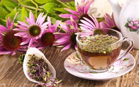 Ekinezya çayı nasıl demlenir?