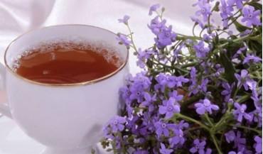 Funda çayı nedir, faydaları nelerdir?