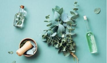 Okaliptüs yağı nedir, faydaları nelerdir?